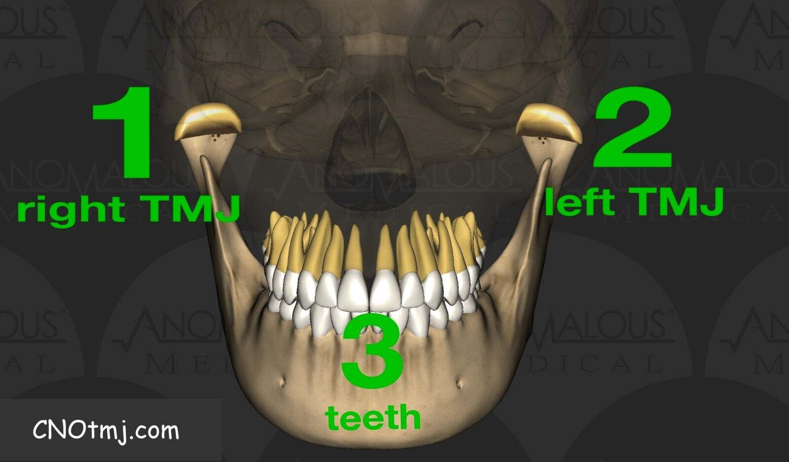 joint joint teeth occlusion